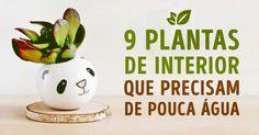 9plantas deinterior que não precisam demuita água