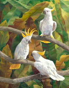 Laurie Snow Hein - Artiste Peintre Contemporaine - Huile - Cacatoès