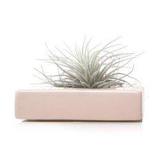 Ballet Pink Tillandsia Planter