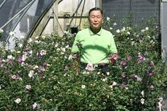 Some of you may have read one of my older posts on plant hunting in Korea. It was one of my greatest adventures and it explains how I met Dr. Shim. Well Dr. Shim just spent three days with me at Spring Meadow Nursery. He came to see some of his new Hibiscus syriacus selections that we are evaluating for potential introduction. Dr. Shim developed Lil' Kim Hibiscus – the first dwarf rose of Sharon