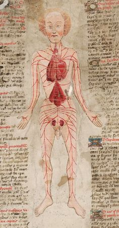 Morbid Anatomy: The Curiously Anatomized Bodies of John Arderne: Guest Post by Michael Sappol, National Library of Medicine