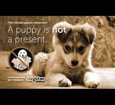 Contra la venta de cachorros de perros pastor aleman España