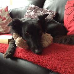 Oz with his favourite teddy