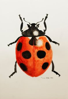 Ladybug Beetle Insect Watercolor Painting by NatureWatercolors