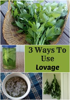 3 Ways to Use Lovage