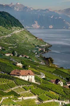 The Lavaux is a region in the canton of Vaud in Switzerland, in the district of Lavaux-Oron. The Lavaux consist of 830 hectares of terraced wineyards that stretch for about 30 km along the south-fa...