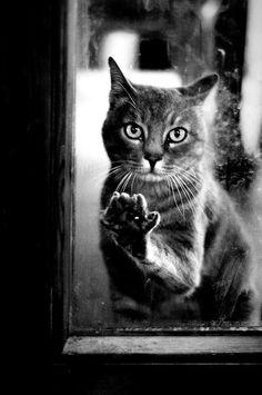 Cat wants in.
