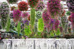掛川花鳥園/花のシャンデリア