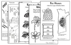 Bee Pollination | Bee Wildflower Mix and Wildflower Seeds | Bee Seed Blend. FREE Activity sheets