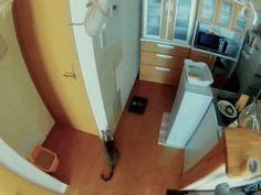 Gif: ハイキャッチ! High Flying Cat (via High Flying Cat... | Namidame links