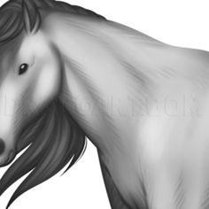 Hey guys, welcome back to another fun filled lesson. This one is going to be for all you horse lovers out there. Today I will be showing you how to dr Horse Drawings, Art Drawings, Rose Step By Step, Head Anatomy, Horse Ears, Types Of Horses, Drawing Guide, Drawing For Beginners, Drawing Techniques