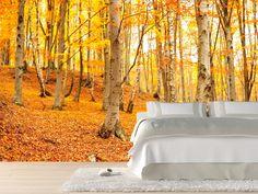 Autumn birch forest Wall Mural Wall murals Pinterest Birch