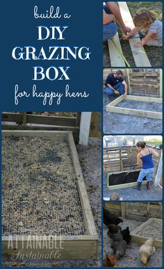 Chicken Coop - DIY grazing boxes make for happy hens. Theyre a great way to save on the cost of raising backyard chickens (and other poultry), too! Building a chicken coop does not have to be tricky nor does it have to set you back a ton of scratch. Raising Backyard Chickens, Keeping Chickens, Backyard Farming, Baby Chickens, Plants For Chickens, Backyard Patio, Building A Chicken Coop, Diy Chicken Coop, Chicken Garden
