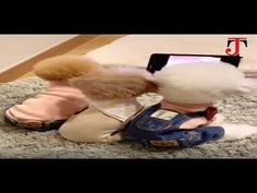 Watch talented and funny animal and pet videos to refresh your day and make you laugh all the way till the end of the videos. Funny Pet Video - Funny and . Pet Videos, Funny Animal Videos, Animals And Pets, Funny Animals, Pets, Humorous Animals, Hilarious Animals, Funny Animal