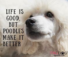 So much better with poodel #Poodles