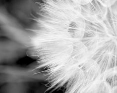 black and white photography fine art nature print by TheGinghamOwl, $18.00