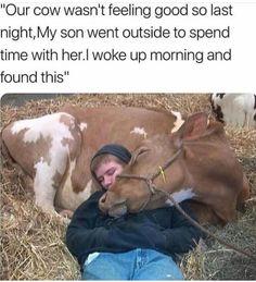 Animal Jokes, Funny Animal Memes, Funny Animal Pictures, Funny Memes, Amazing Animal Pictures, Funny Humour, Pet Memes, Memes Humor, Funny Pictures Of People