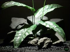 reptile habitat or terrarium plant elephant ear by ron beck designs  ronbeckdesigns.com  ebay & etsy #ron_beck_designs #aquarium #reptile #plant