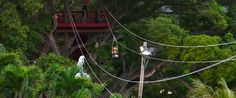 GoZip Oahu – Oahu Zip Lines. A Great Family Activity in Hawaii! We are the only Oahu zipline!