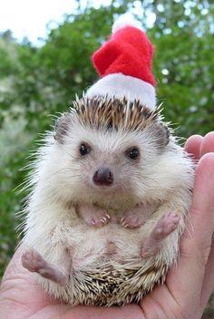 Christmas prickle