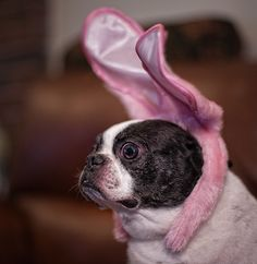 """The Easter Dog is coming!"" 