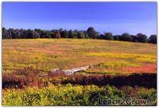 Meadow Autumn splendor