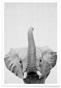 Print 50 als Premium Poster von Lila x Lola Animals Black And White, Black And White Pictures, Grey Pictures, Black White, Elephant Love, Elephant Art, Elephant Poster, Animals And Pets, Baby Animals