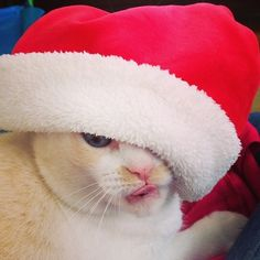 It's So Funny When Cats Can't Even Fake The Christmas Spirit. - http://www.lifebuzz.com/santa-cats/