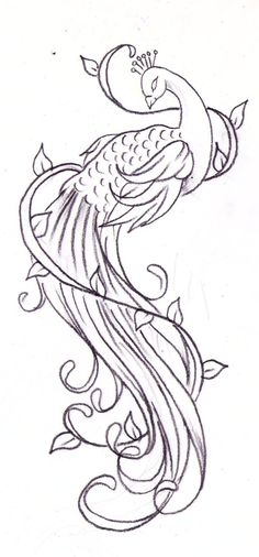 peacock tattoo sketch