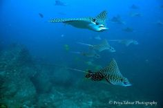 Why The Pacific Provides the Best Scuba Diving in Costa Rica | RICH COAST DIVING' s BLOG