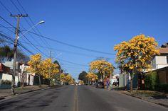 Curitiba (por Bill Machado - Flickr)