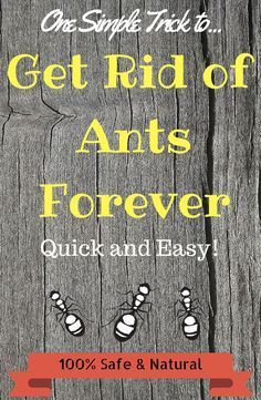Homemade ant repellent that works like a charm! Learn how to get rid of ants safely and naturally with this DIY Ant Repellant Spray. http://www.chipptips.com/ants #ants #antrepellent #antspray