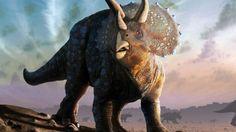 Triceratops herd.