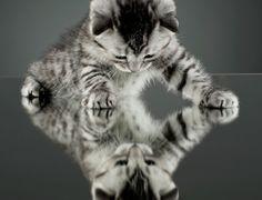 Glasstop Kitten