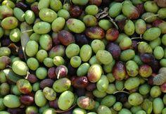 green olives!!!!