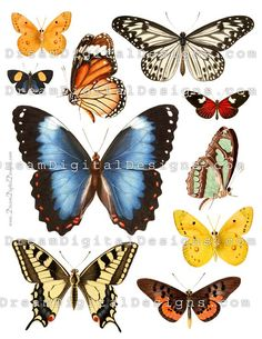 Mariposas de Collage Digital hoja mariposa ilustraciones