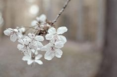 SPRING 2013 Dandelion, Eyes, Spring, Flowers, Plants, Photography, Photograph, Dandelions, Florals