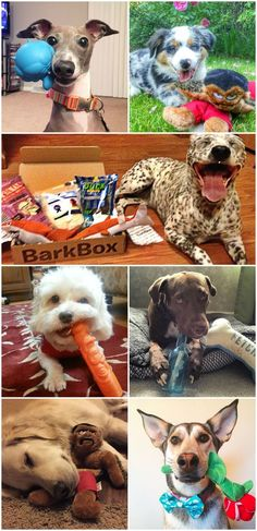 BARKBOX (bahrk-boks), noun: For humans, BarkBox is a monthly box of paw-picked toys and all-natural treats. For pups, it's the joy of a thousand belly scratches. For mailmen, it's burying the bone and hatchet. BarkBox can be customized for big dogs and heavy chewers!