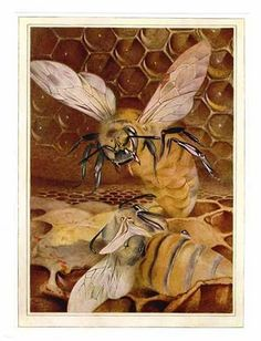 "Bees:  ""The Duel of the Queens,"" by  E. J. Detmold, 1911. #Bees."