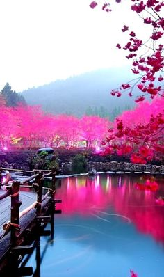 Pink hues of the Cherry Blossom Lake in #Sakura, Japan