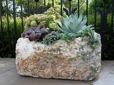 Salvage look of a weathered limestone trough. Unquestionable vintage statement for a succulent planter. Plants, Container Plants, Succulents, Cool Plants, Mini Garden, Plant Combinations, Garden Inspiration, Container Gardening, Succulents In Containers
