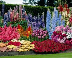 perennial plants - Delphinium, Gladioulas, Red hot poker, dianthus, yarrow and bulbs