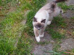 Katje met mooie Blauwe ogen in Harlingen. Friesland