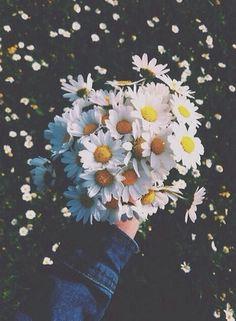 Imagen de flowers, daisy, and white