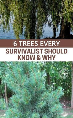 wilderness survival guide tips that gives you practical information and skills to survive in the woods.In this wilderness survival guide we will be covering Urban Survival, Survival Life, Survival Food, Homestead Survival, Wilderness Survival, Camping Survival, Outdoor Survival, Survival Prepping, Survival Skills