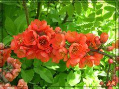 Flores de arbol
