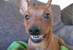 dogs who smile.