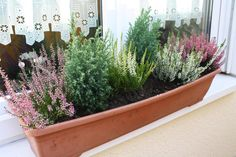 Planting for autumn and winter - Home Page Winter Plants, Winter Garden, Balcony Garden, Garden Planters, Winter Hanging Baskets, Balcony Flowers, Autumn Photography, Winter House, Window Boxes