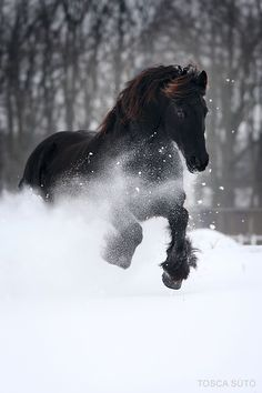 beautiful horse in the snow