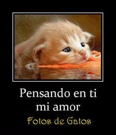Fotos de Gatos: Pensando en ti. Fotos divertidas de gatos